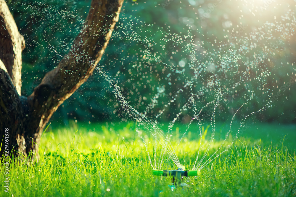 Fototapety, obrazy: Garden, Grass Watering. Smart garden activated with full automatic sprinkler irrigation system working in a green park, watering lawn, flowers and trees. sprinkler head watering. Gardening concept