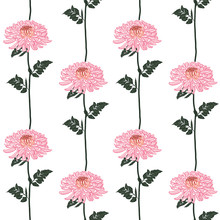 Vector Seamless Floral Pattern. Blooming Pink Japanese Pink Chrysanthemum Flowers . Illustration In Stripe Vertical Line Design, Textiles, Paper, Wallpaper, Curtains, Blinds. Golden Leaves,
