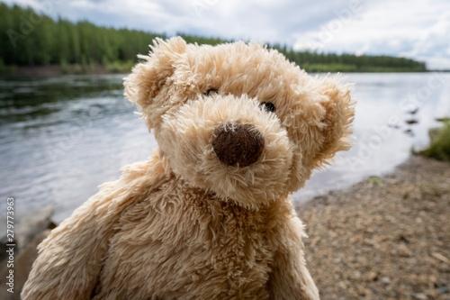 Fotografie, Obraz  teddy bear along the river hiking