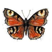 Hand Painted Watercolour Moth / Butterfly With Paint Splatter No. 19