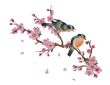 Watercolor Traditional Chinese Painting Of Flowers, Cherry Blossom And Two Birds On Tree, Isolated On White Background. Can Be Used As Romantic Background For Wedding Invitations, Greeting Postcards,