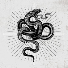 Snake Poster. Hand Drawn Vector Illustration In Engraving Technique With Star Rays On Grunge Background.