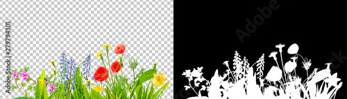 Fotografía  spring grass and daisy wildflowers isolated with clipping path and alpha channel