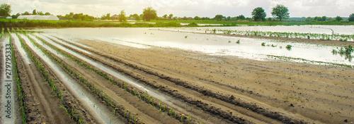 Fotografie, Obraz  Agricultural land affected by flooding