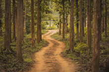 Unexplored Path / Road Less Taken At Nagarhole National Park, Karnataka, India. Bandipur Forest. Curvy Road Ahead. Jungle Safari Searing Wild Animals. Tall Trees, Glomy Weather, Mysterious Nature