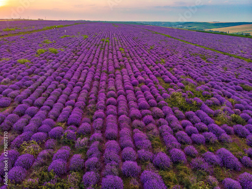 Tuinposter Snoeien Beautiful image of lavender field Summer sunset landscape. Aerial drone.