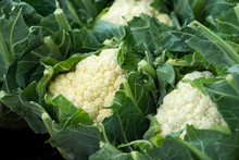 Fresh Cauliflower Heads With L...