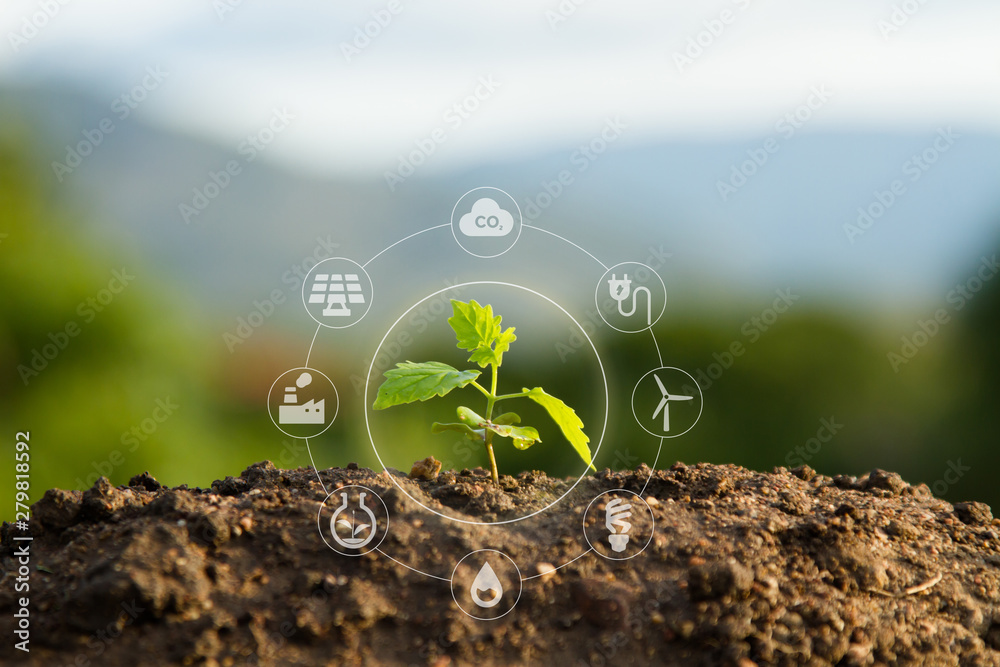 Fototapeta Seedling with bubble of eco icon with green nature background. Clean environment, Solution of Air and Environment pollution concept.