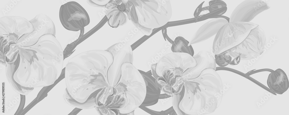 Fototapety, obrazy: Background with  Orchids flowers. Vector illustration, EPS 10