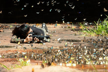 Professional Woman Photographer Taking Butterfly In The Green Jungle Rain Forest Nature. Travel And Vacations Concept