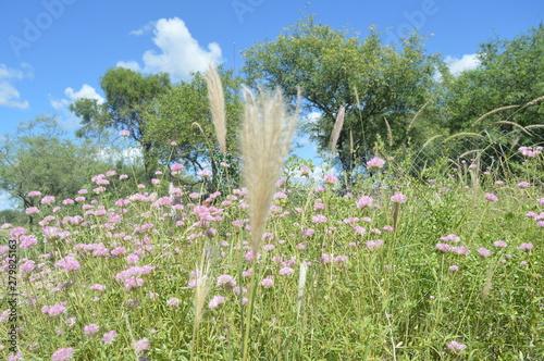 Fotografia  Flores Silvestres 1
