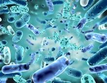 Bifidobacterium, Bacterial Str...