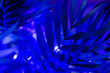 canvas print picture - Tropical palm leaves shadows in ultraviolet light.