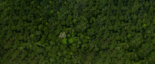 Aerial Top View Forest, Texture Of Forest View From Above, With Copy Space Design For Web Banner.