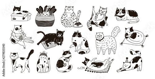 Fotografie, Obraz Collection of cute funny cats sitting, washing, stretching itself, playing