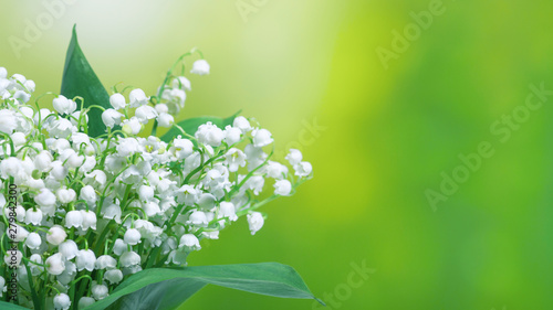 Obraz Lily of the valley (Convallaria majalis), blooming spring flowers, closeup with space for text. Spring background, banner. - fototapety do salonu
