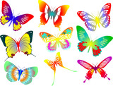 Collection of colored butterflies. Vector illustration