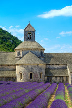 Lavender Fields In Full Bloom In Early July In Front Of Abbaye De S?nanque Abbey, Vaucluse, Provence-Alpes-C?te D'Azur, France