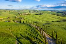 Italy, Tuscany, Val D'Orcia, Siena Province, Cypress Tree Road Leading To Agriturismo Baccoleno Near Asciano