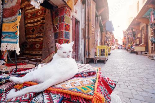 Fotografía  Cute white cat sitting on hte carpet at souvenir shop on Fez Medina street, Morocco