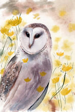 Watercolir Illustration Of A Barn Owl In A Field With Bright Yellow Flowers