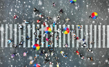 Aerial. People Crowd On A Pedestrian Crossing Crosswalk When It's Rain. View Above.