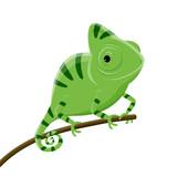 Fototapeta Dinusie - cartoon illustration of a green chameleon