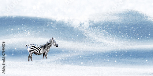 Winter magical Christmas image. Zebra on a snowy background. Snowfall. Winter fairyland. Free space for text. Wide format.