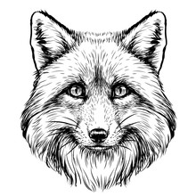 Fox. Graphic, Sketch, Black A...