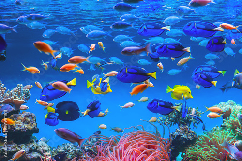 Photo Colorful schools of tropical fish