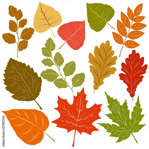 Foto op Canvas Draw Autumn Leaves Fall Season Vector Elements isolated on white