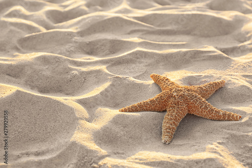Photo Sandy beach with beautiful starfish near sea on sunny summer day