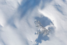 Aerial View Of Tree In Heavy Snow On A Mountain In Winter