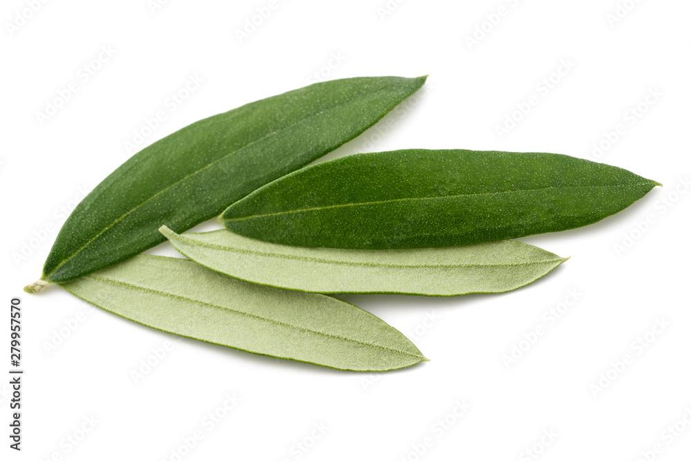 Fototapeta Olive leaves - obraz na płótnie