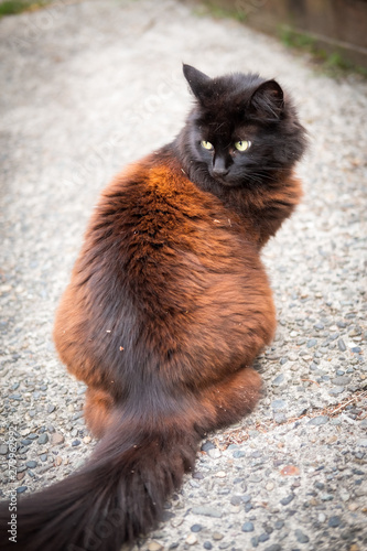 A black and brown cat sits on a concrete driveway