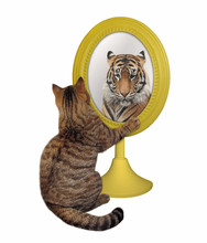 The Cat Stares His Reflection In The Mirror. This Is A Tiger. White Background. Isolated.