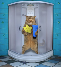 The Cat With A Yellow Sponge A...
