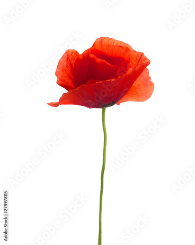 Foto op Canvas Poppy Red poppy isolated on white. studio shot