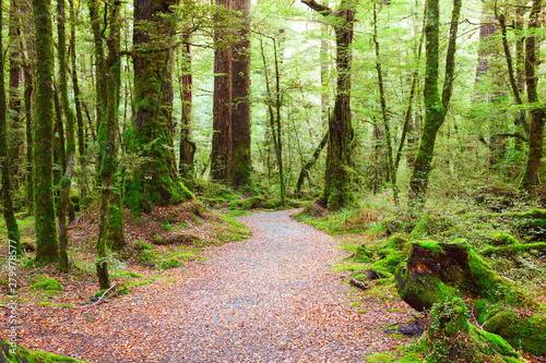 Printed kitchen splashbacks Road in forest Pathway through rainforest , Fiordland National Park, South Island, New Zealand