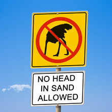 No Head In Sand Allowed Ostric...