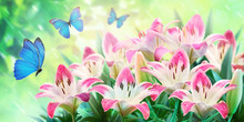 Floral Summer Natural Landscape With  Pink Lilies Flowers  And Fluttering Butterflies On Soft Green Background. Dreamy Gentle Wonder Air Artistic Image. Summer Template, Artistic Image, Free Space