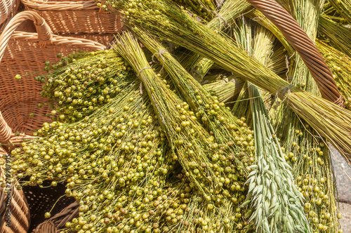 Obraz Fresh crop of flax in basket - fototapety do salonu