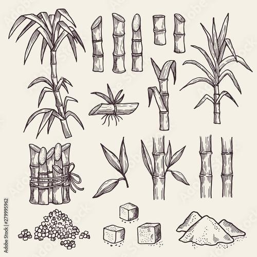 Sugar cane Fototapeta