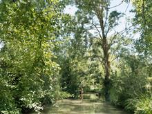 Balade Dans Le Marais Poitevin. Le Long Du Canal De Forges, Sous Les Frènes Et Peupliers Verdoyant