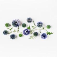 Blue Thistle Flowers, Echinops...