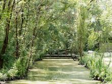 Marais Poitevin. Site De France. Paysage Verdoyant De La Venise Verte Sous Les Frènes Et Peupliers Le Long D'un Canal