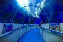 Underwater Aquarium Tunnel Wal...