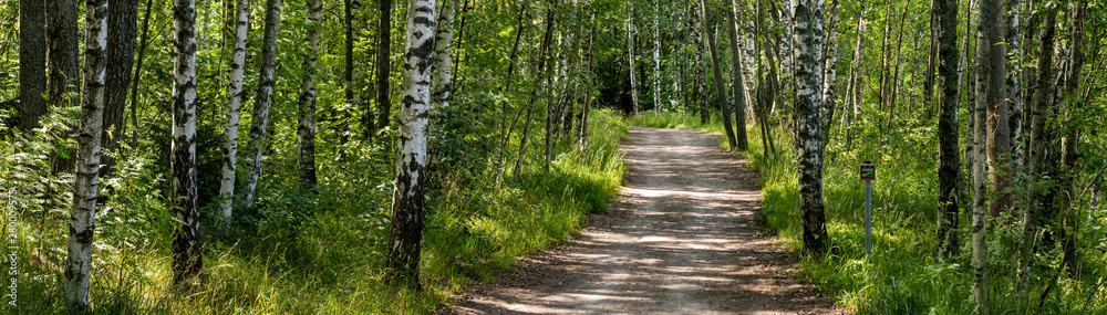 Fototapeta Path in Finnish forest panorama HDR large