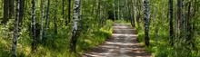 Path In Finnish Forest Panoram...
