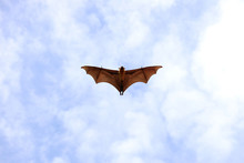 "Bat Flying In The Sky.""Lyle's ..."